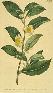 Le thé 170px-10