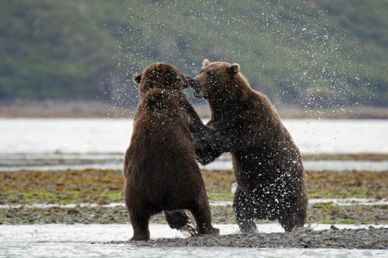 Bears of Many Colours A5540010