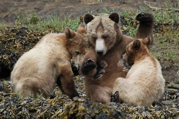 Bears of Many Colours Tideri10