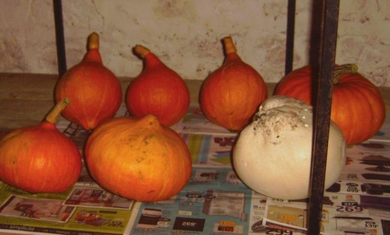 Essais de permaculture sur buttes. Pot_ve10