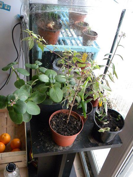 Mon petit coin de verdure (junilau) Coin-l10