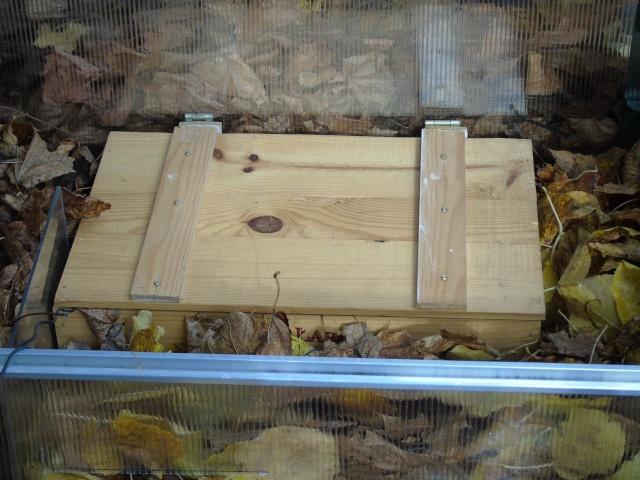 Hibernation de Sissi la petite boettgeri Dsc00512