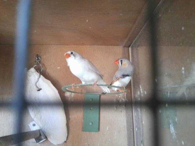 2 de mes jeunes Photo025
