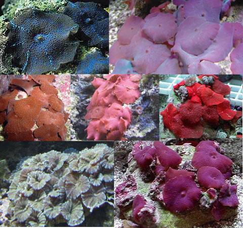 Les coraux faciles Web-di10