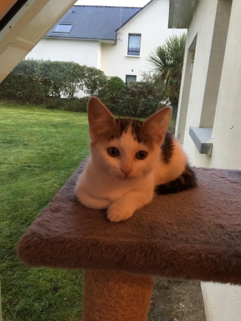 Janah, chatonne de type européen tigrée et blanche, née le 01/09/14 Img_4512