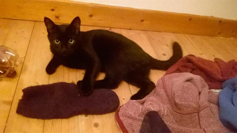 Jack, chaton mâle noir né le 19/04/2014 Wp_20117