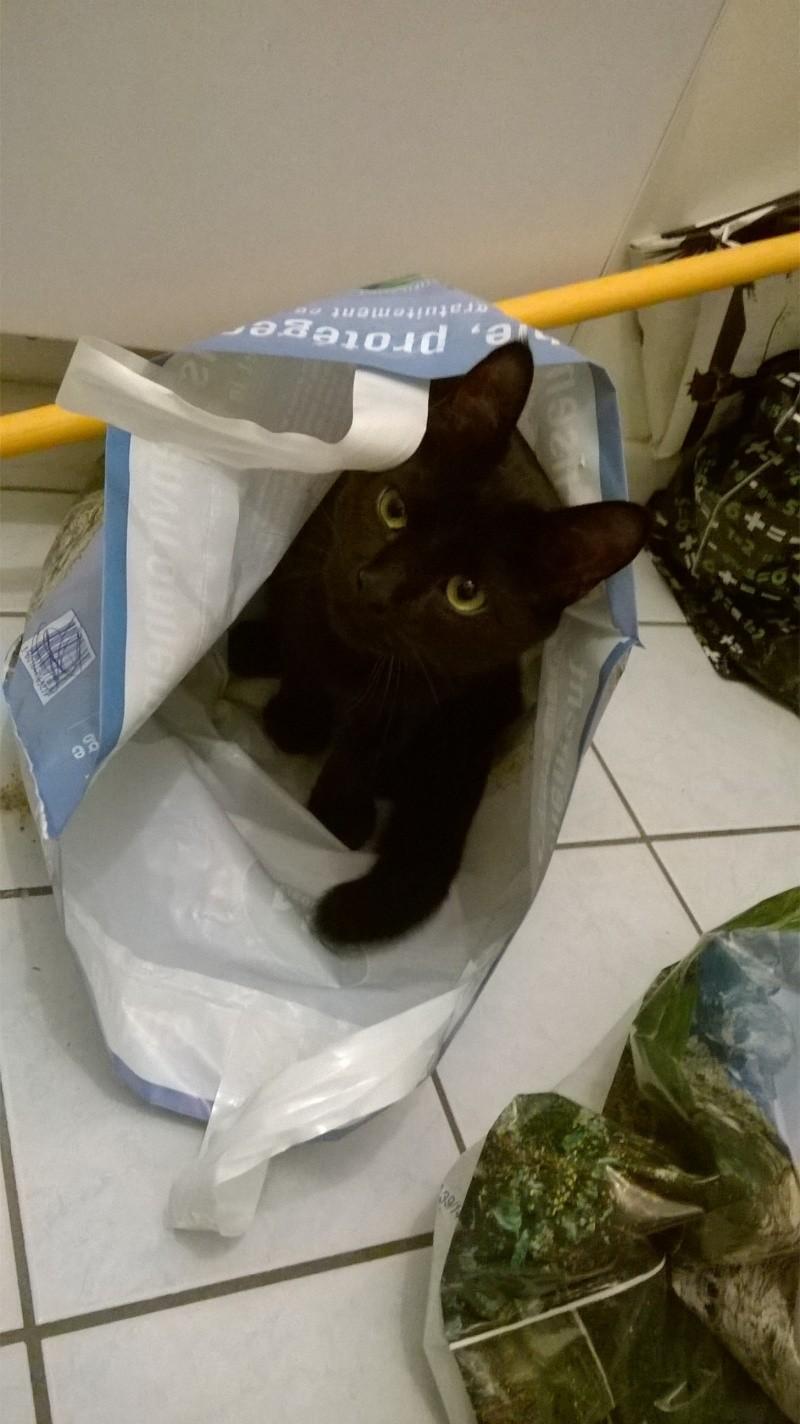 Jack, chaton mâle noir né le 19/04/2014 Wp_20120