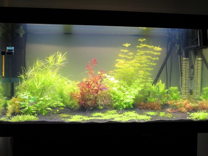 juwel rio 300 bien planté  Img_0410