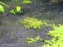 juwel rio 300 bien planté  Img_0411