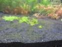 juwel rio 300 bien planté  Img_0412