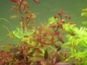 juwel rio 300 bien planté  Img_0413