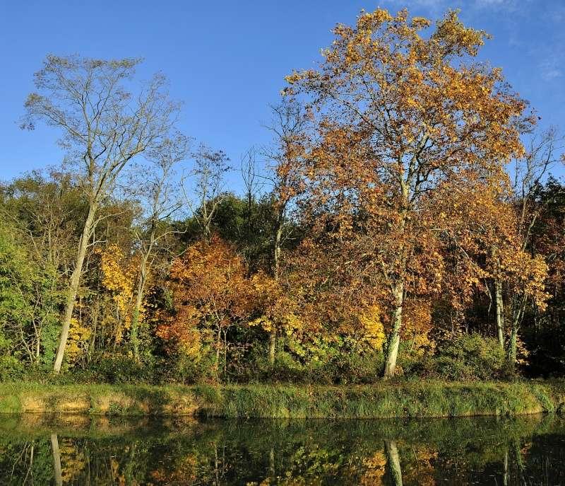 Un après-midi d'automne Automn12