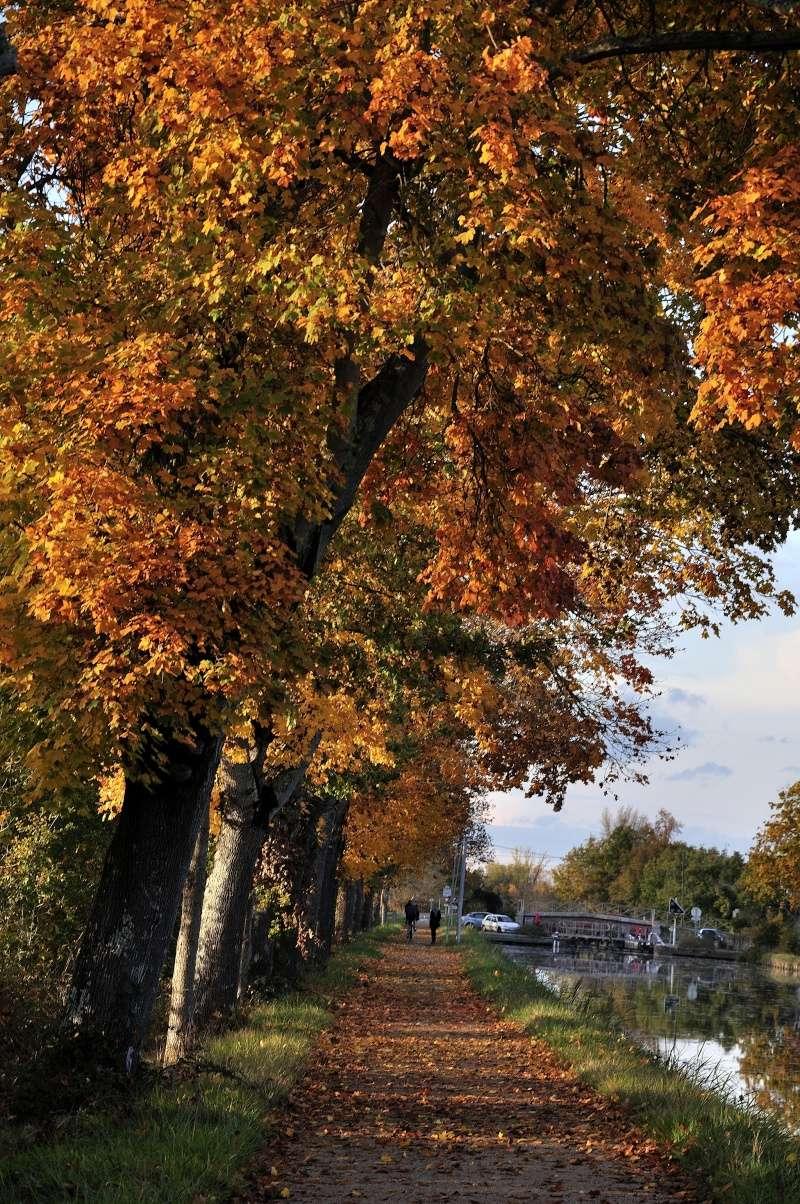 Un après-midi d'automne Automn13