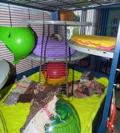 Photos de vos cages - Page 3 P1020914