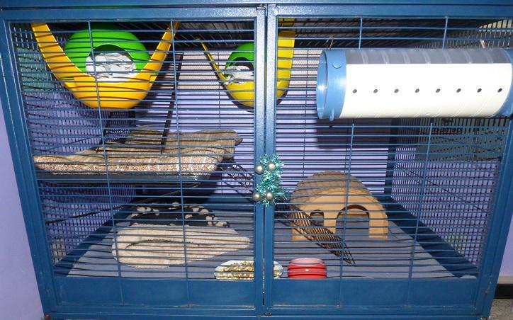 Photos de vos cages - Page 3 P1020916