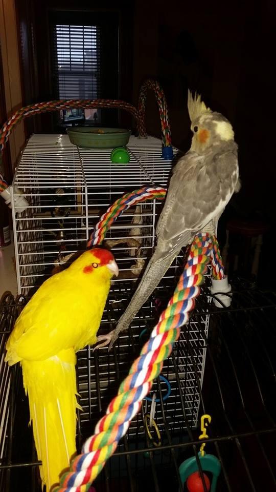 Kiwi fait la rencontre de bébé Lola 10734110