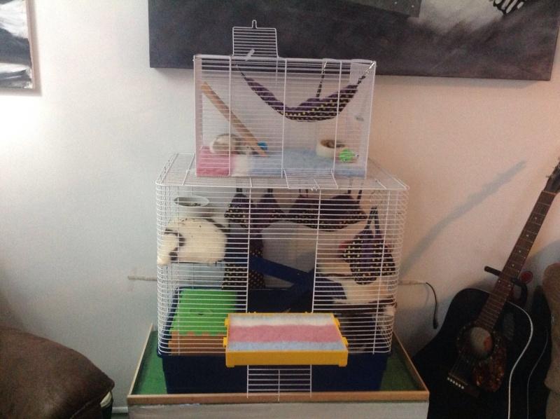 Voici ma cage Image11