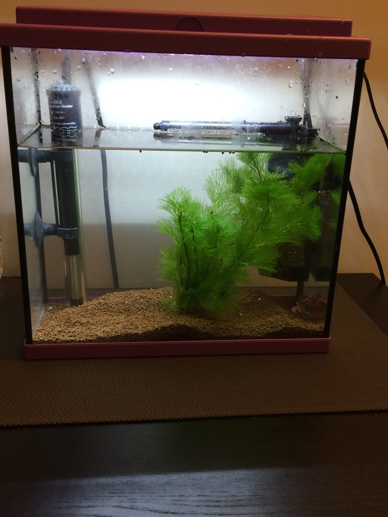 Avis éclairage aquarium 20l Aqua10