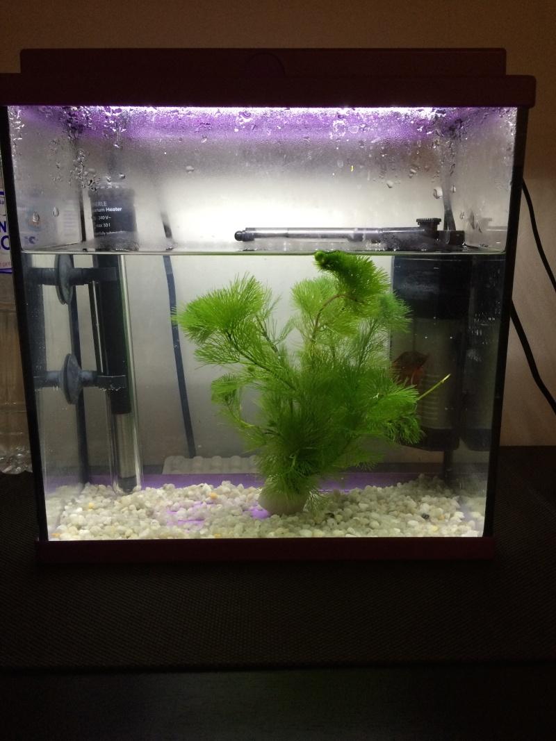 Avis éclairage aquarium 20l Bubull10
