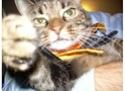 Post pet pictures here! Zelda_10