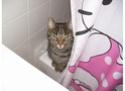 Post pet pictures here! Zelda_11