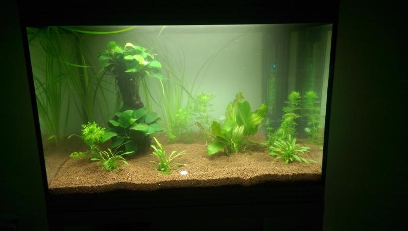 Aqua 68L (Planté) Imag1220