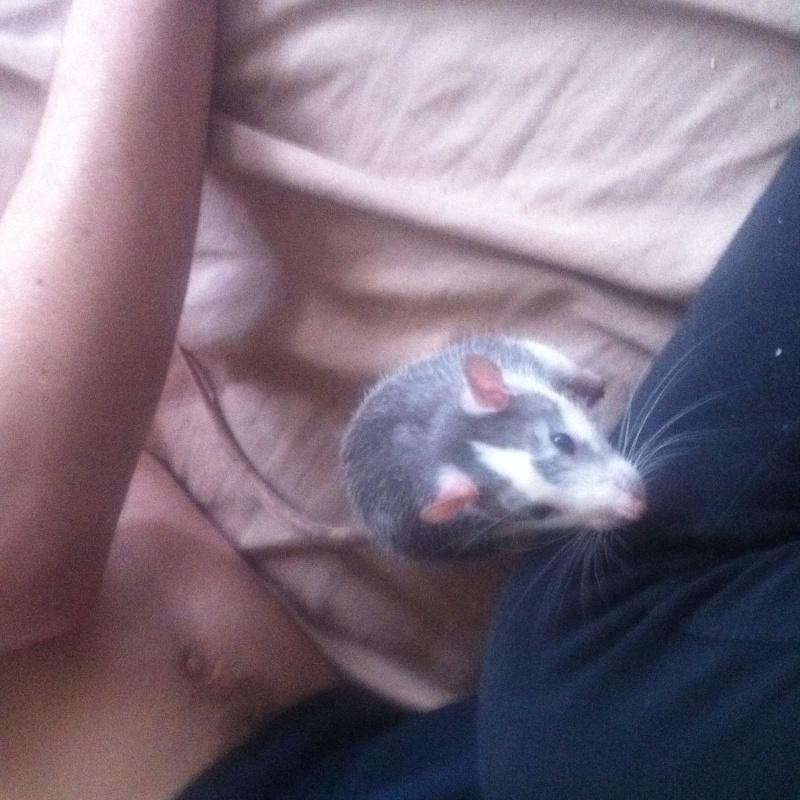 Besoin de photo de vos rats pour mon dossier ! Img_0214