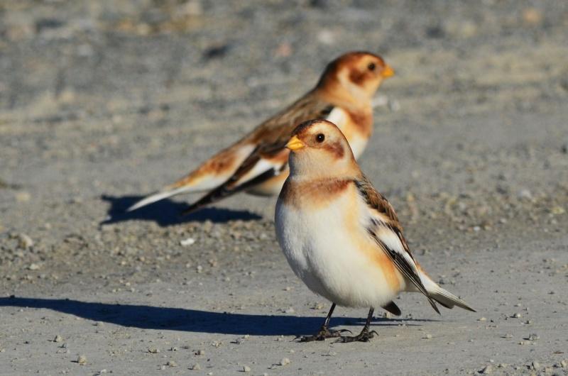 Oiseaux d'hiver 15_nov10