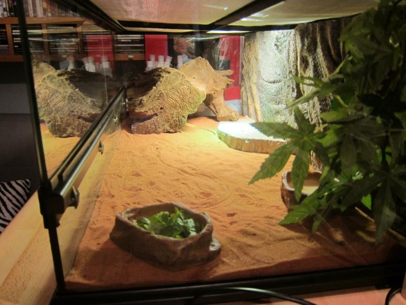 Question a propos de mon premier terrarium  Img_0611