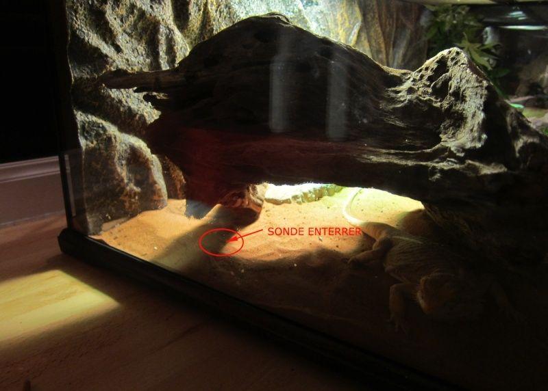 Question a propos de mon premier terrarium  Koko10