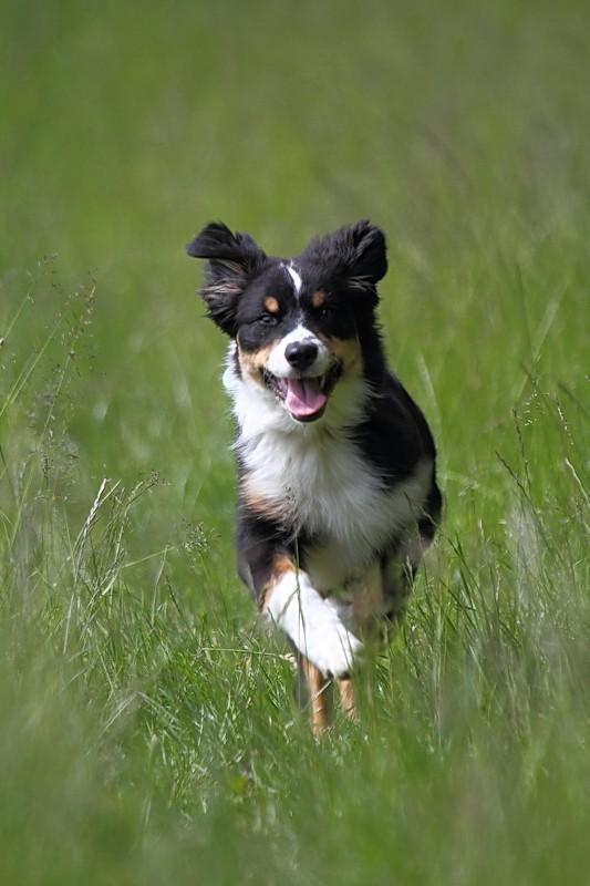 Photographie d'animaux - conseils pour devenir un pro ! 05084010