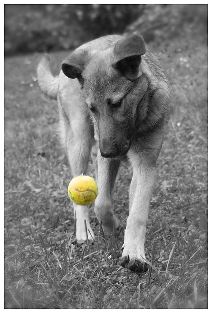 Photographie d'animaux - conseils pour devenir un pro ! - Page 3 Essai310