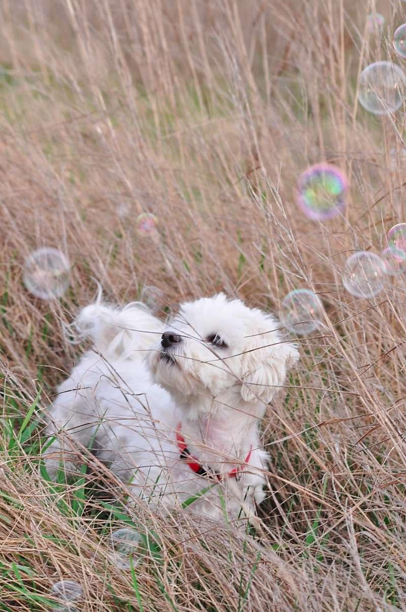 Photographie d'animaux - conseils pour devenir un pro ! _dsc0110