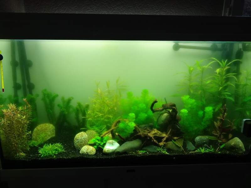 lancement de mon aqua  Divers10