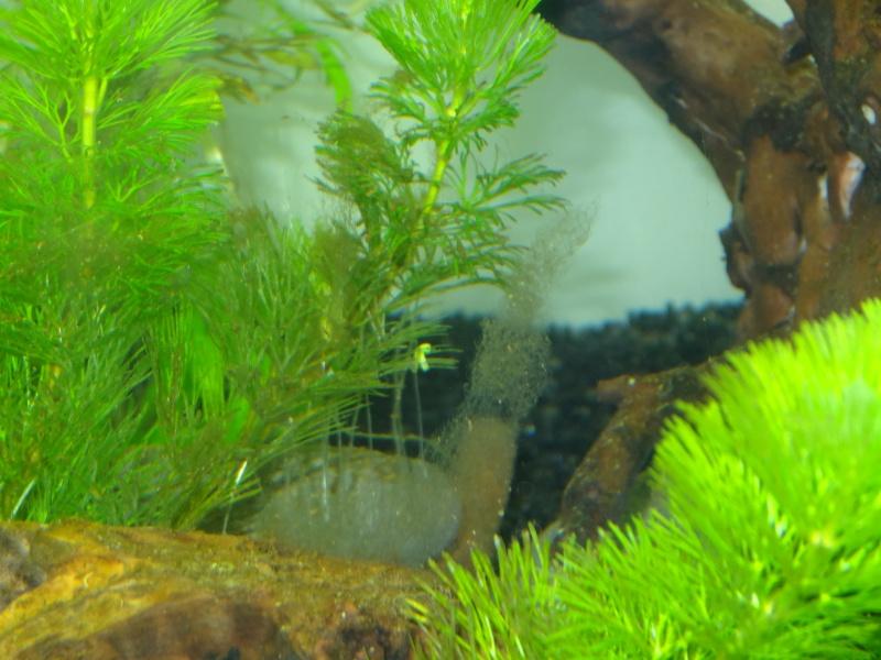 encore des algues Poisso11