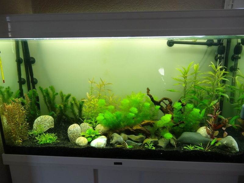 encore des algues Poisso12