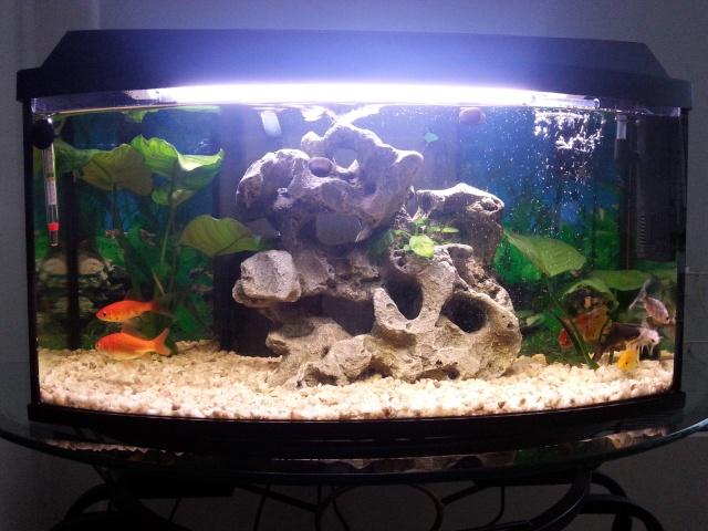 presentation de mon aquarium (debutant)60l eau douce  20141123