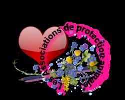 Forum un Amour de Chat Gmyky410