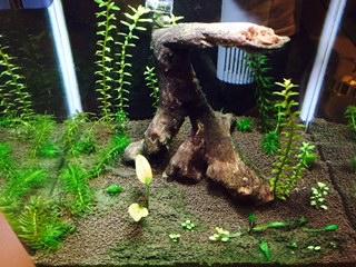 Plantes qui ne poussent plus Image213