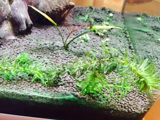 Plantes qui ne poussent plus Image512