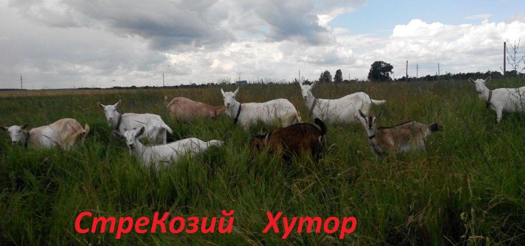 СтреКозий хутор<meta name='yandex-verification' content='752fa54a4ff86cf2' />