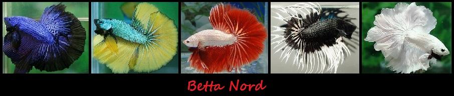 Betta Nord, fait par des passionnés, pour des passionnés!