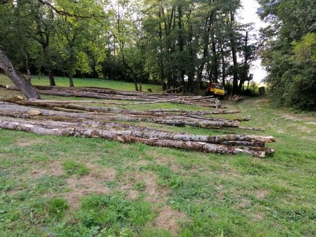 mon 421 forestier - Page 10 11821310