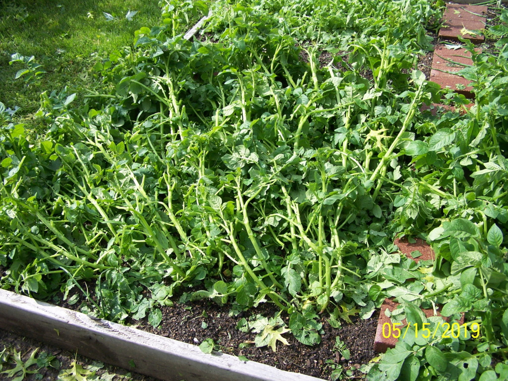 Catastrophe in my garden. Storm_10
