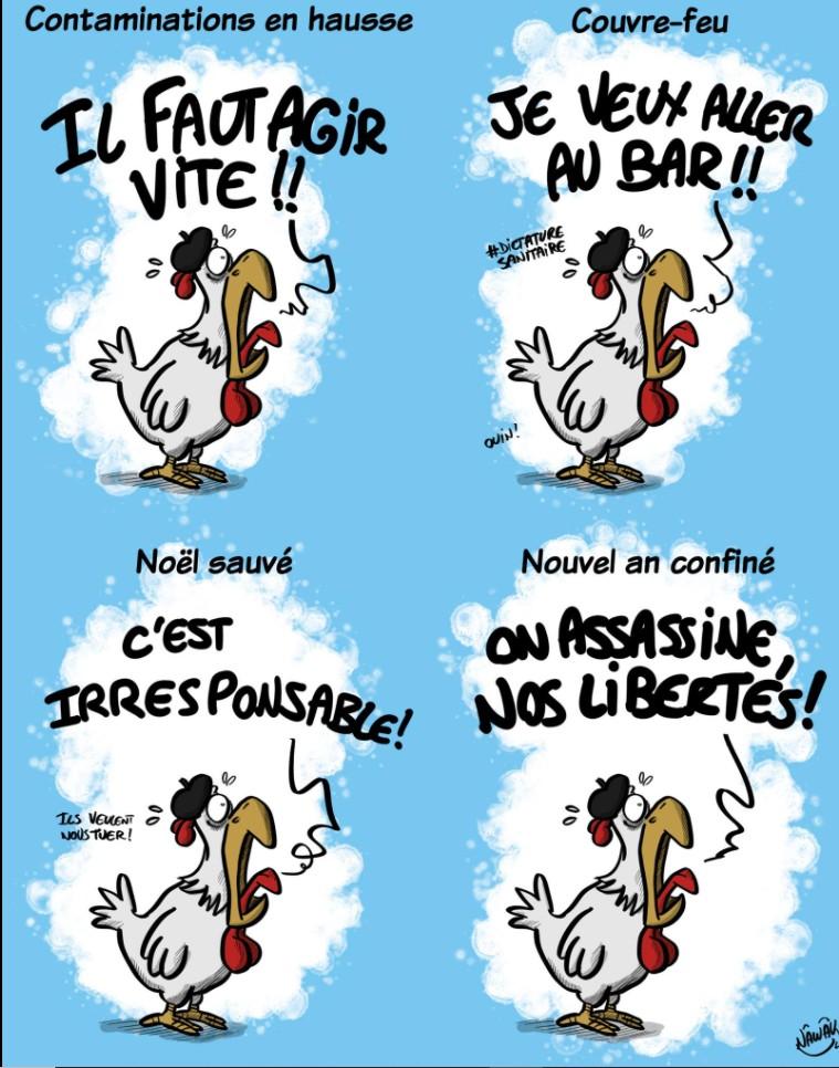 Le coq français Franca10
