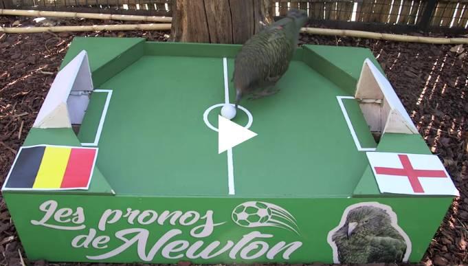 Животные-оракулы на ЧМ-2018 по футболу - Страница 16 2010