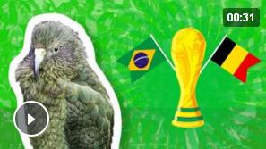 Животные-оракулы на ЧМ-2018 по футболу - Страница 15 Au10