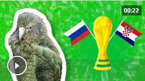Животные-оракулы на ЧМ-2018 по футболу - Страница 15 Iaau10
