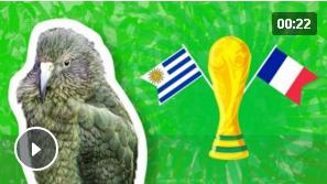 Животные-оракулы на ЧМ-2018 по футболу - Страница 15 Iaau11
