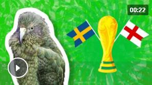 Животные-оракулы на ЧМ-2018 по футболу - Страница 15 Oau10